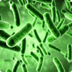 bacteria viruses in water